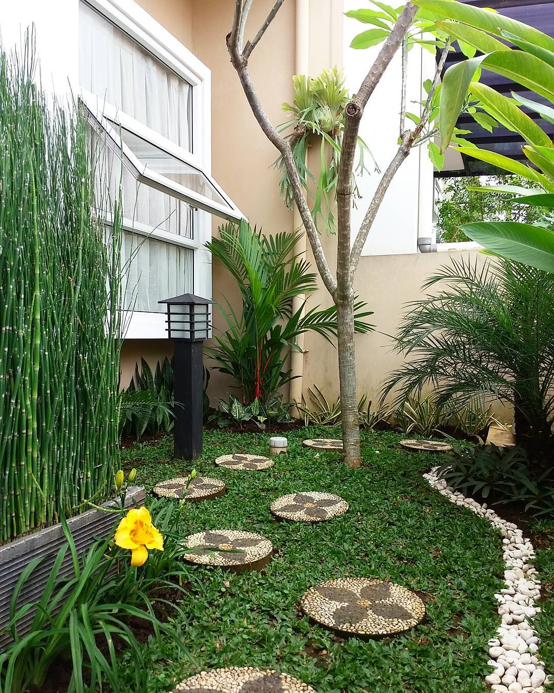Taman Buah Di Belakang Rumah Minimalis Destaman
