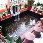 Kolam Ikan Minimalis Di Lahan Sempit