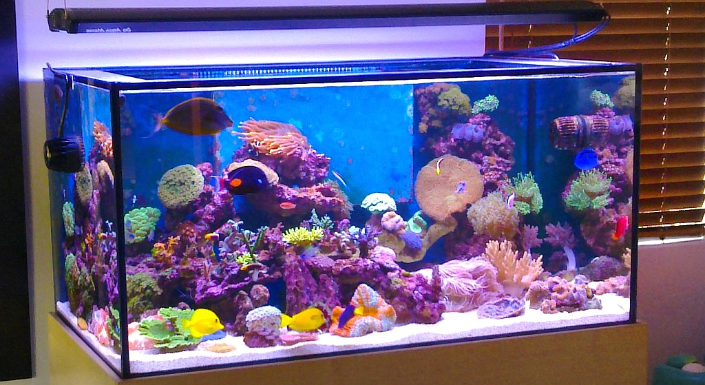 Harga Kaca Aquarium