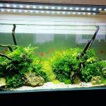 Contoh Gambar Aquarium Terbaru
