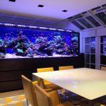 Desain Aquarium Minimalis Modern