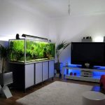 Desain Aquarium Rumah Untuk Ikan Hias