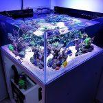 Gambar Aquarium Kecil