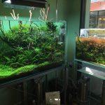 Harga Aquarium Minimalis
