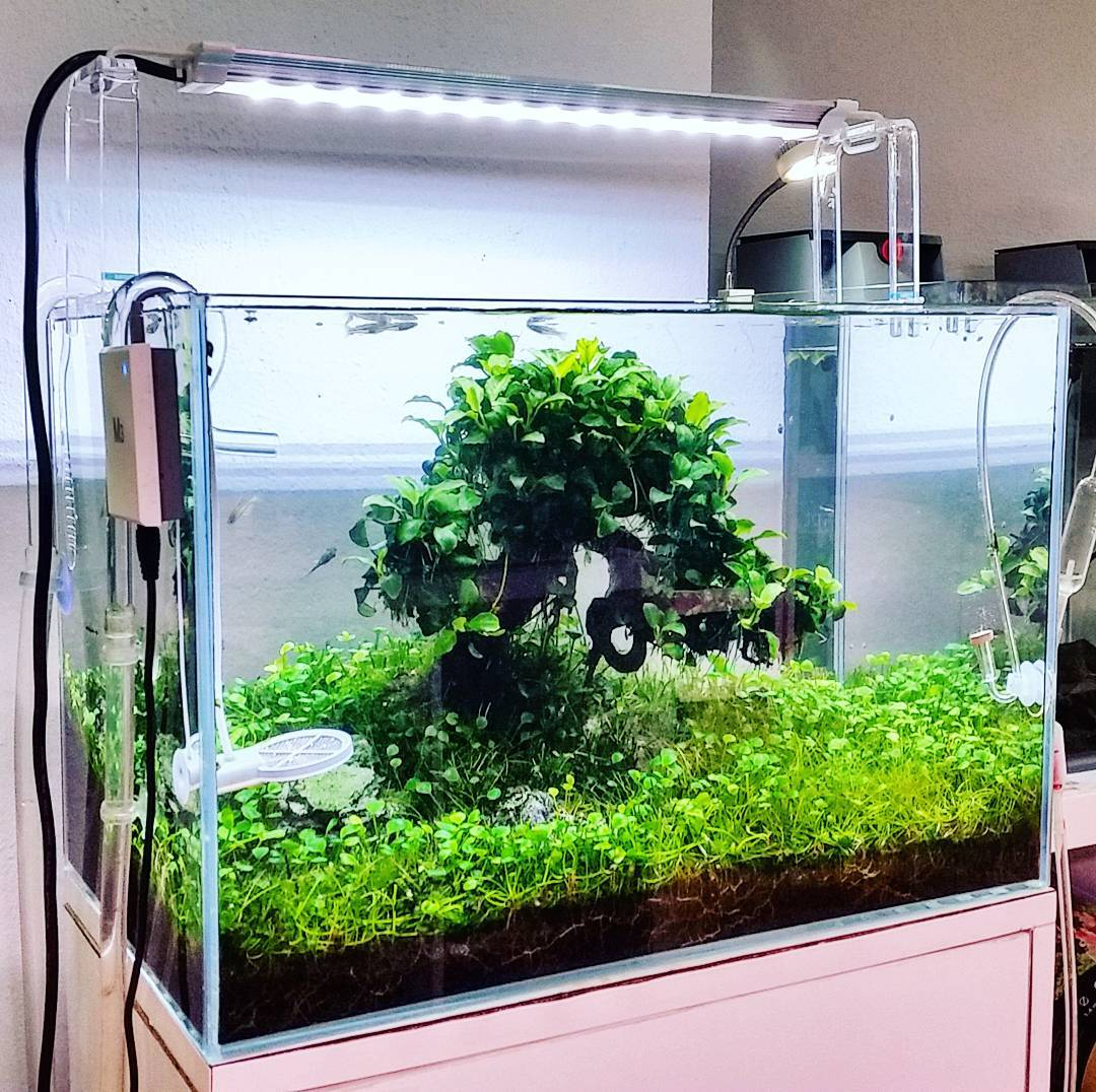 26 Model Aquarium Ikan Hias Minimalis Terbaru 2018 Dekor Rumah # Faire Support Aquarium Beton Cellulaire