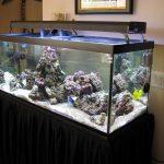 Model Aquarium Ikan Hias Terbaru