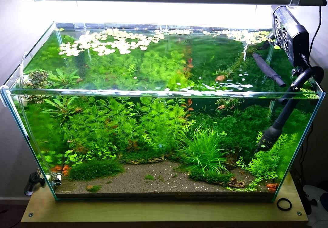 26 Model Aquarium Ikan Hias Minimalis Terbaru 2019 Dekor