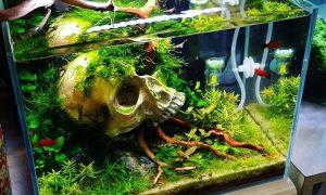 Model Aquarium Minimalis Unik Terbaru