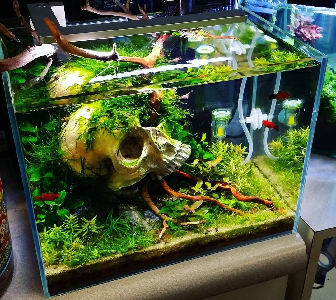 Model Aquarium Minimalis Unik Terbaru