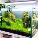 Model Aquarium Untuk Ikan Arwana